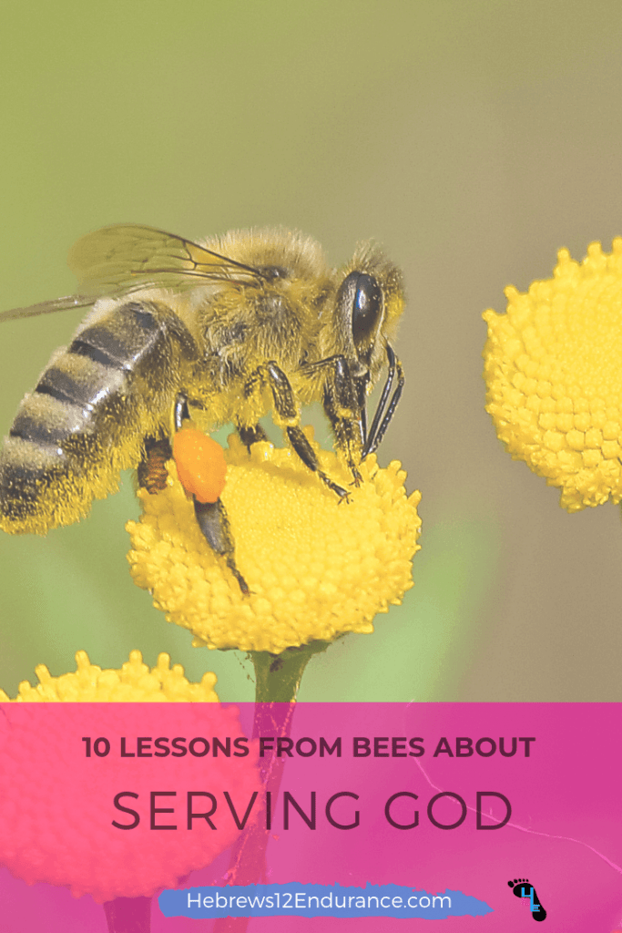 10-Lessons-from-bees