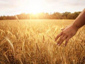 Understanding the parables of Jesus